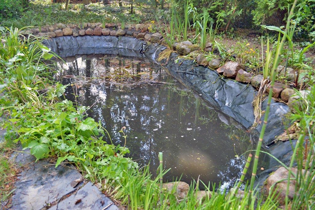 Teichpflege exklusive gartenteiche for Gartenteichpflege algen