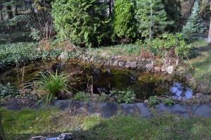 Ein vernachlässigter Gartenteich umgeben von Bäumen