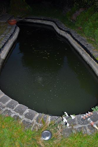 Teichwasser stinkt - Hilfe