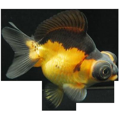 Gartenteich f r goldfische exklusive gartenteiche for Gartenteich goldfische
