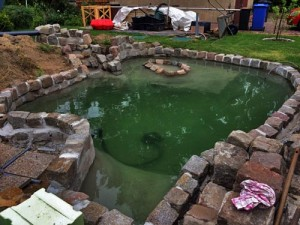 Teich für Wasserschildkröten