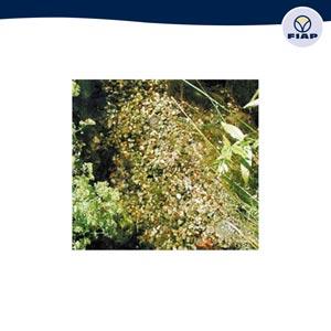 Fiap premiumcare wasserpflege for Gartenteichpflege algen