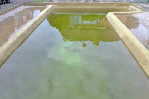 Teichcompound-Naturpool-mit Wasser