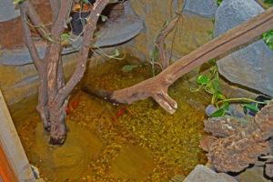 Teich im Terrarium