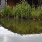 Schwimmteichrandzone