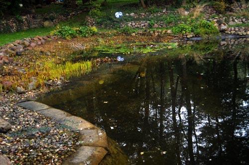 Teichpflege im Spätsommer und Herbst