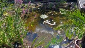 Naturnahen Gartenteich als EcoTeich