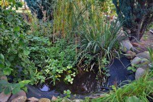 Verlandeter Gartenteich