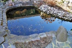Flachwasserbereich-vor-Teichsanierung