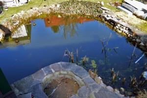 Tiefwasserbereich-vor-Teichsanierung