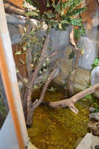 Baumstamm-im-Indoorteich
