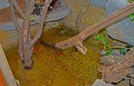 Ein naturnaher Teich im Terrarium